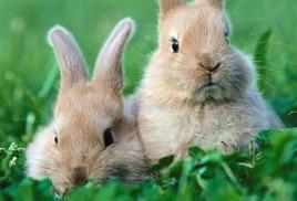 Семинар по кролиководству